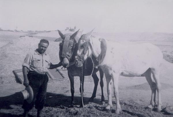 387.-Casimiro-Garcia-Marino-en-la-era-con-sus-mulas.-Decada-1960.-Procedencia-Victoria-Hernandez-Gutierrez