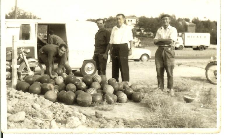 447.-Felipe-Ocana,Juan-El-Grillo-y-Antonio-el-Senorito,-en-la-recogida-de-melones.-Proced.-Luis-Ocana-Villasevil