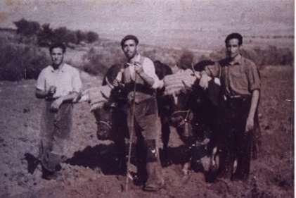 86.-Labrando-con-bueyes.-Hacia-1955.-Procedencia-Emiliano-Magan