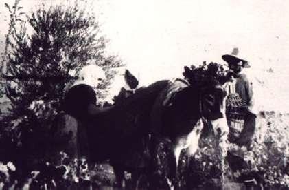 88.-La-vendimia.-Hacia-1940.-Procedencia-Sara-Sanchez-del-Cerro