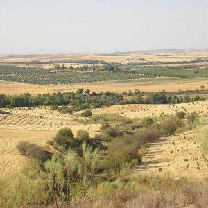 Zepa del area esteparia de la margen derecha del rio Guadarrama