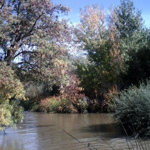 Ribera del rio Guadarrama
