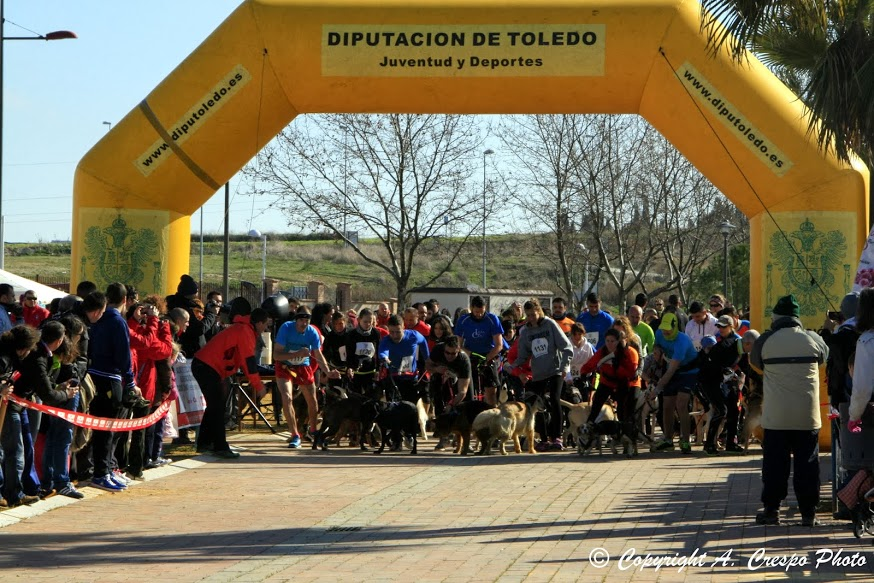 El pasado domingo día 23, se celebró en el Recinto Ferial de Bargas el III Canicross Benéfico con gran éxito de participación con más de 250 corredores.