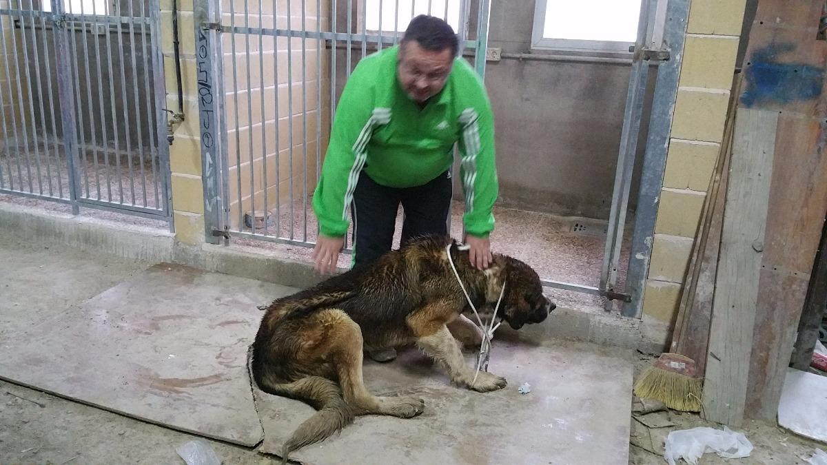 Se ha encontrado un perro de raza mastín» en la Calle Cabrera.»